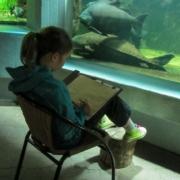 Mädchen malt vor Aquarium